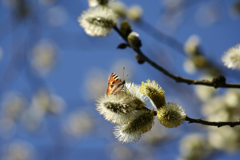 Read more about the article Frohe Ostern – besonders jetzt!